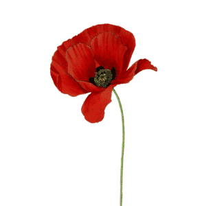 one red poppy to show support the armed forces covenant