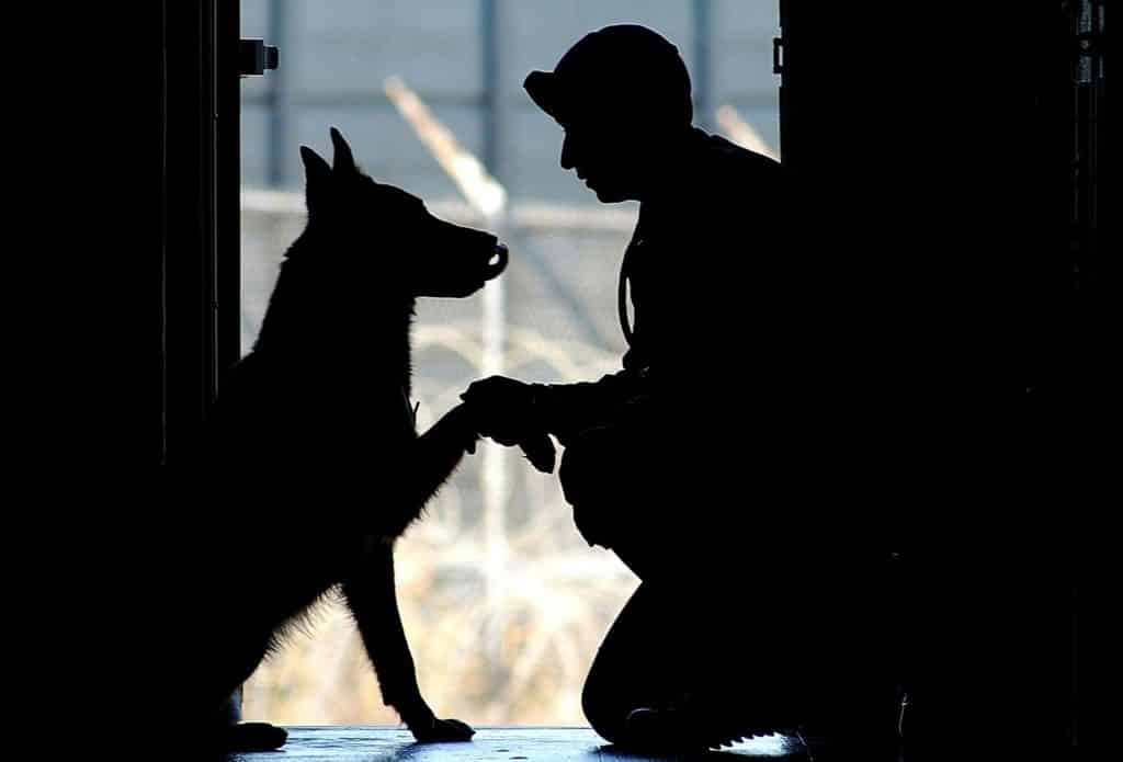 soldier and dog serive affects dental health